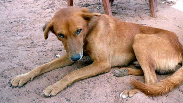 Évala : SOS pour les chiens au Togo