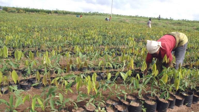 Quel rôle pour la femme rurale Togolaise dans sa communauté ?