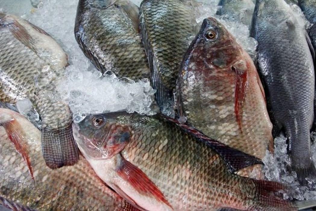 Togo: Attention ! Ne mangez plus des tilapias importés, ils contiennent le virus mortel (TiLV)