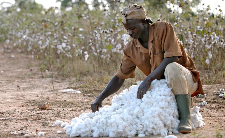 Un manuel pour guider les producteurs de coton dans la gestion de leur organisation