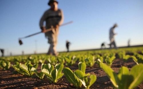 Agriculture : BTCI appuie le MIFA avec une enveloppe de 5 milliards