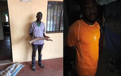 Deux présumés trafiquants d'ivoire arrêtés à Lomé