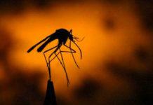 Le diagnostic et le traitement du paludisme sont désormais gratuits au Togo à partir de ce lundi 06 mai