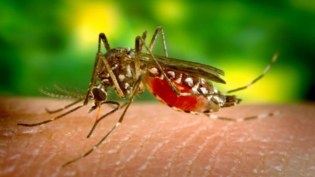 Lutte contre le paludisme : les soins sont désormais gratuits au Togo