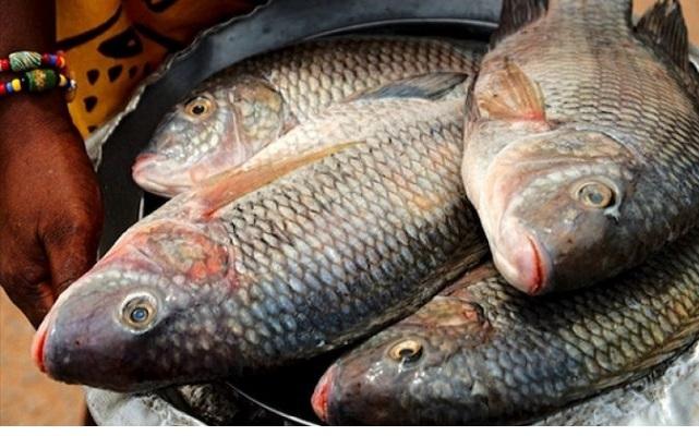 Tilapia : Noël Bataka met en garde les importateurs