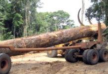 Vers l'adoption d'un guide juridique en matière d'infractions forestières