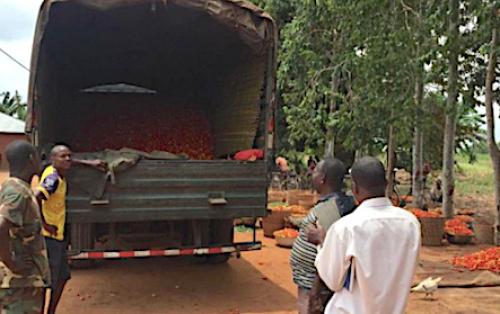 Le gouvernement au secours des producteurs victimes de la fermeture des frontières nigérianes