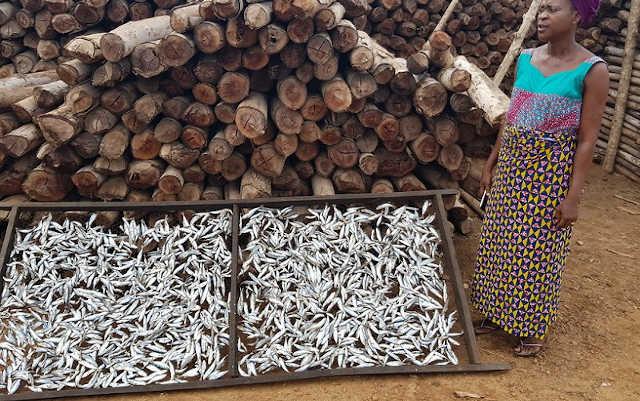 Togo / Grand Reportage : Au cœur du Ghetto, les Femmes Transformatrices de Poissons Luttent pour leur Survie