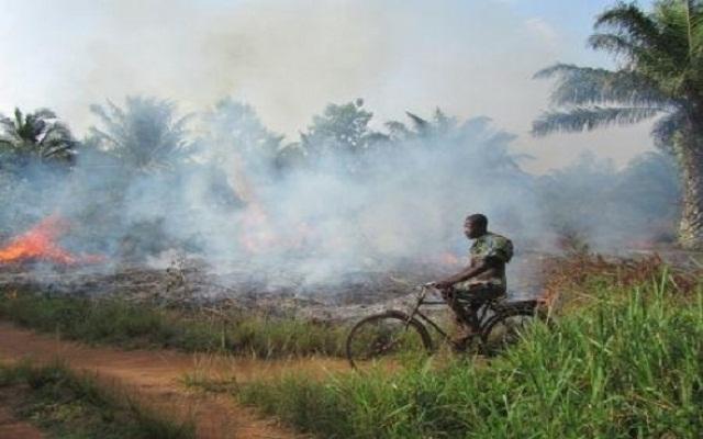 Feux de végétation : Des sanctions prévues pour des feux tardifs