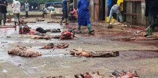 Insalubrité répugnante à l'abattoir de Lomé, Togo   Photo : Miabe Togo Actu