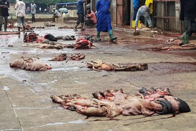 Insalubrité répugnante à l'abattoir de Lomé, Togo | Photo : Miabe Togo Actu