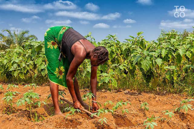 promotion du secteur agricole togo