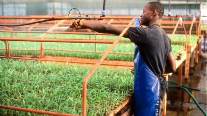 Déjà 200 000 emplois créés sous le PND (Christian Trimua)