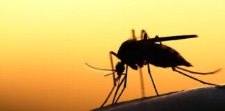 Le Togo veut tirer un trait sur le paludisme