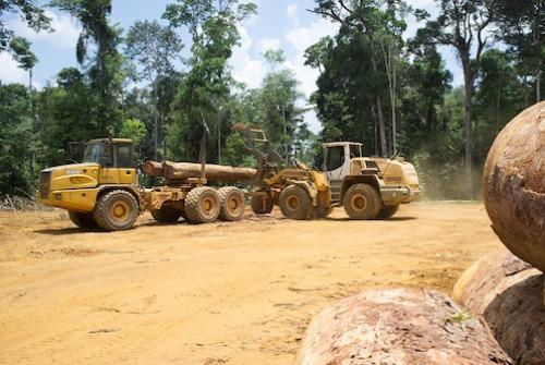La PIA se propose d'acheter les bois de teck auprès des exploitants forestiers