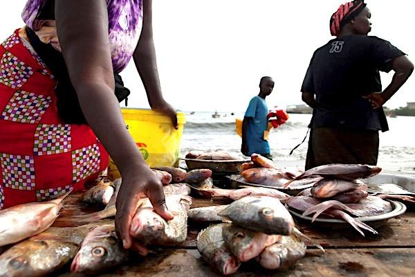 Au Togo, la pêche artisanale en croissance