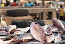 Les importateurs de produits halieutiques invités à régulariser leurs agréments sanitaires